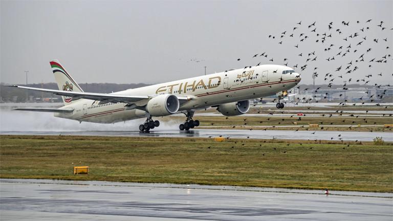 Gefährlicher Schwarm: Flugzeug beim Start in Frankfurt