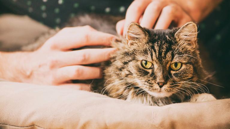 Mensch streichelt Katze