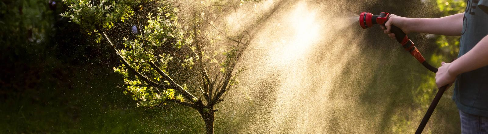Junge wässert einen Baum.