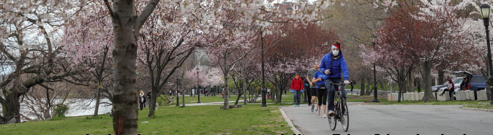 Mann mit Mundschutz auf einem Fahrrad. Der Weg ist gesäumt von blühenden Kirschbäumen.