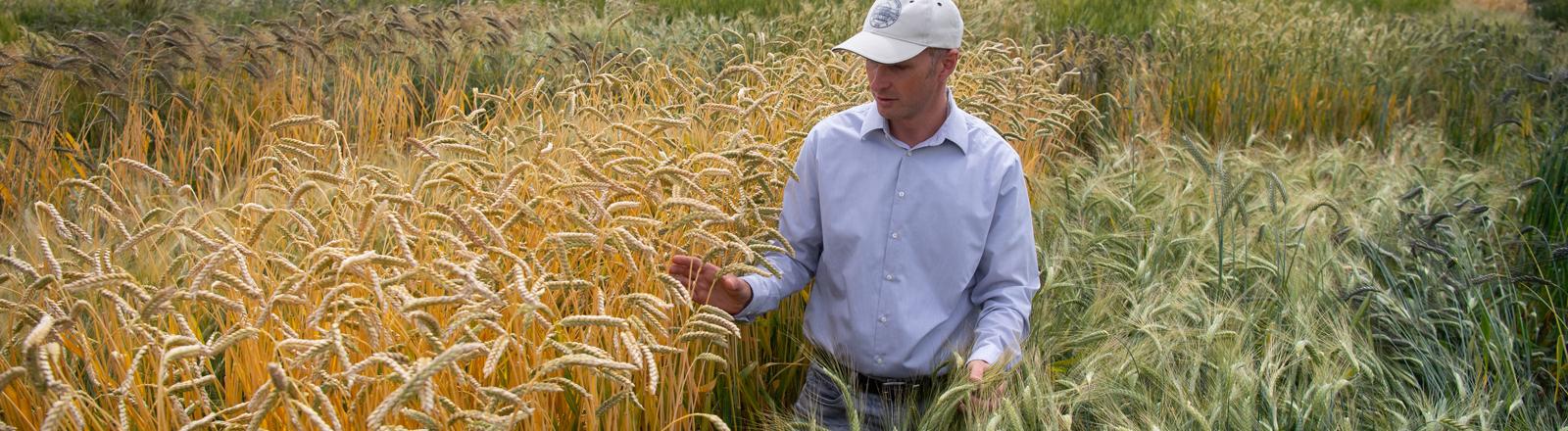 Mann in einem Weizenfeld