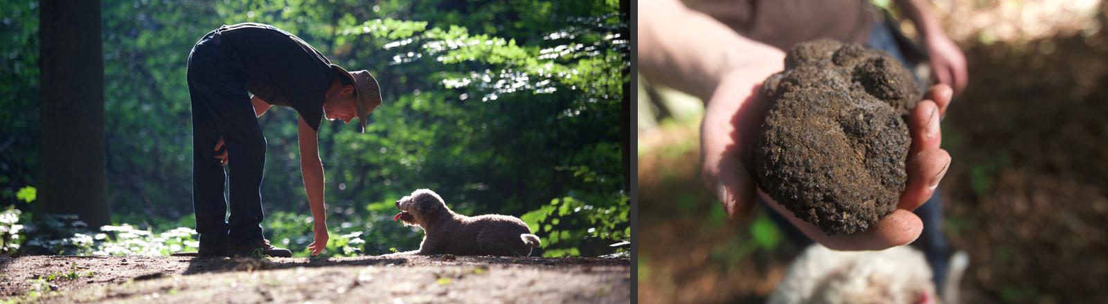 Mann mit einem Hund und Trüffeln