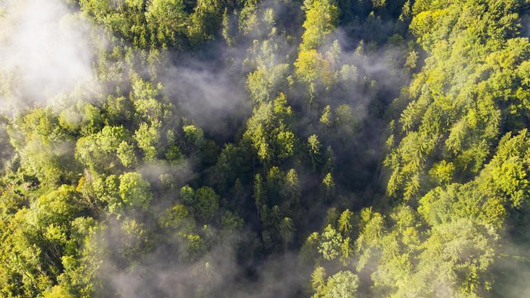Das Pflanzen neuer Bäume ist kein Allheilmittel