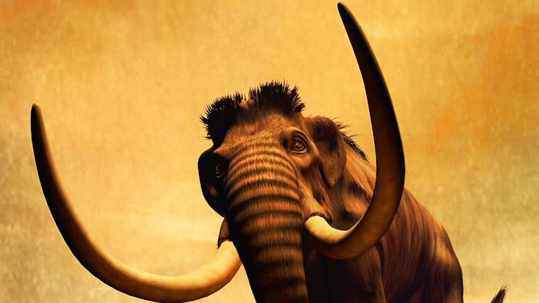 Warum starben die letzten Mammuts?