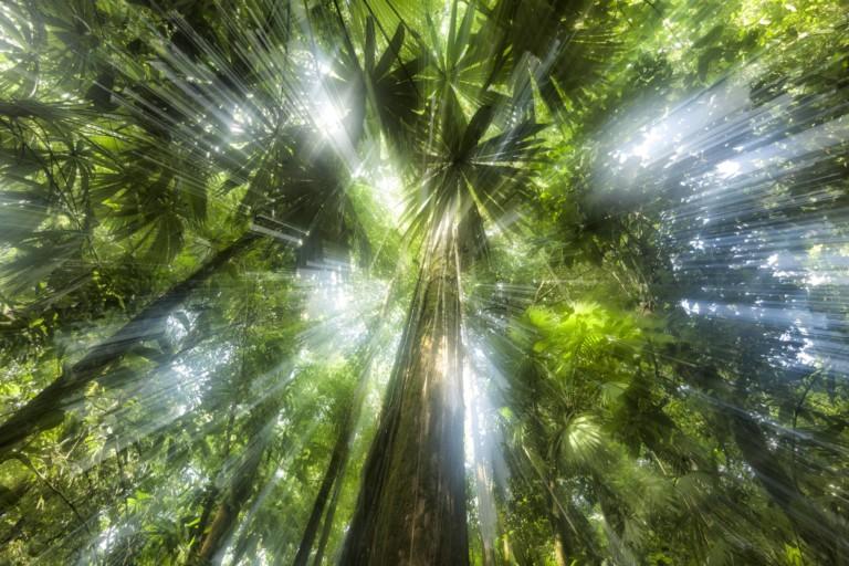 Affenjagd im Regenwald