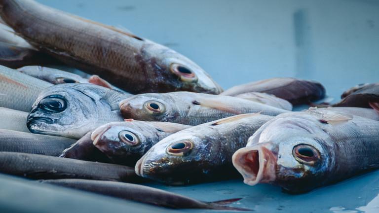 Wie nachhaltig sind Fische mit Siegel?