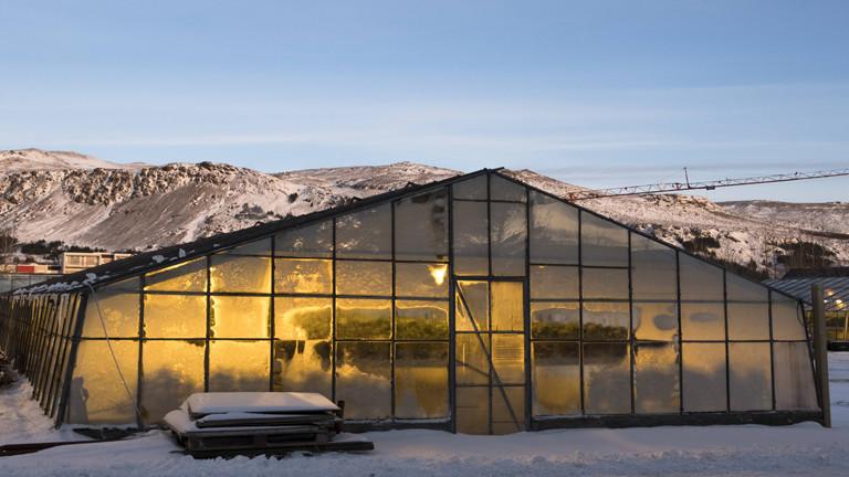 Gewächshaus in Island