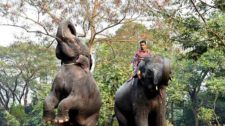Zoo stoppt Elefantenreiten