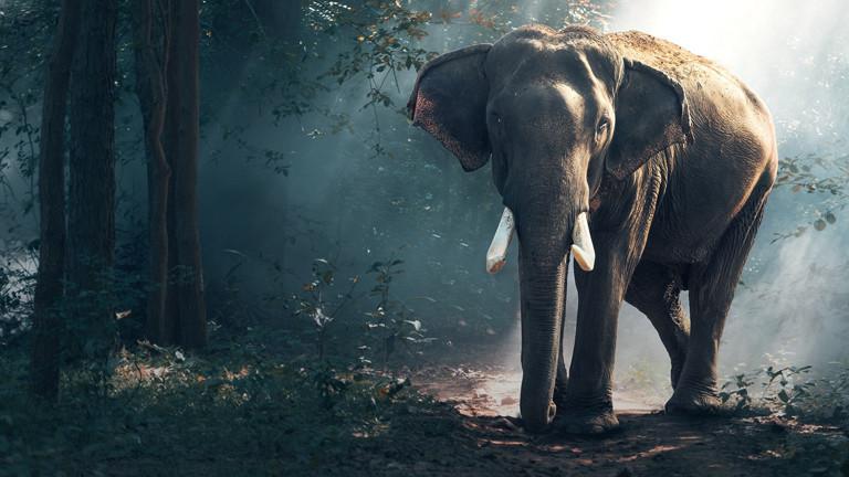Elefanten-Wärmebilder sollen beim Artenschutz helfen
