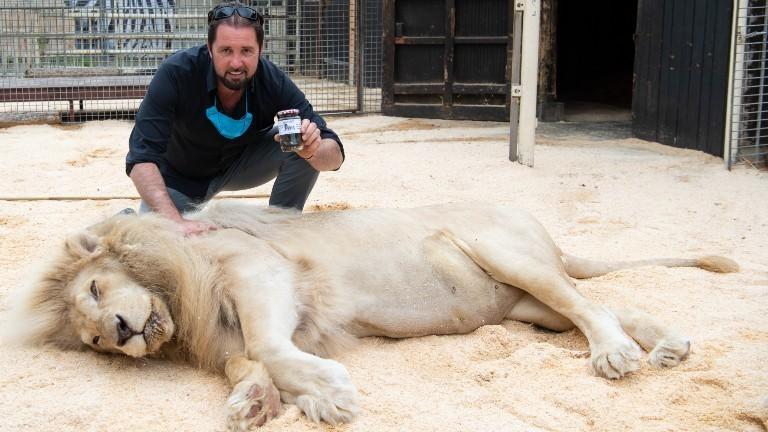 Martin Lacey mit einem Löwen des Circus Krone