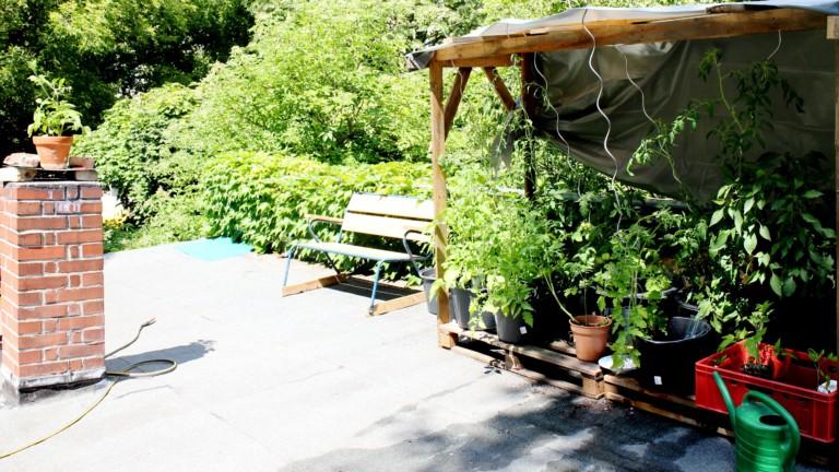 Tomatenanbau auf Werkstattdach