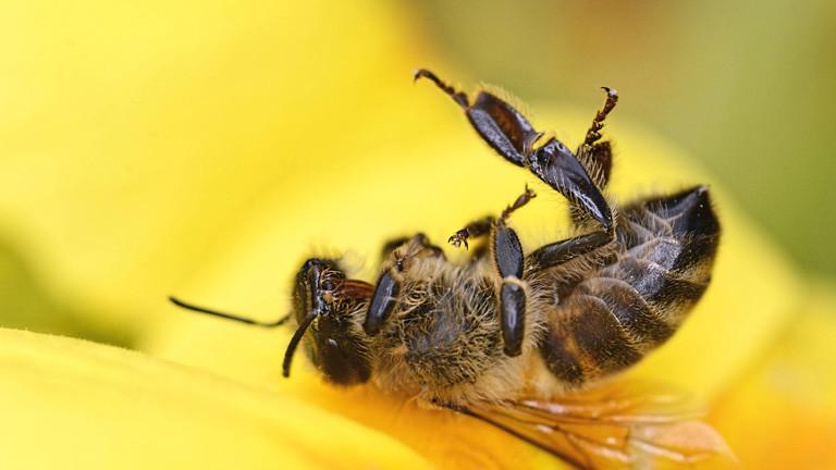 Auch Insektizid-Alternative bringt nix