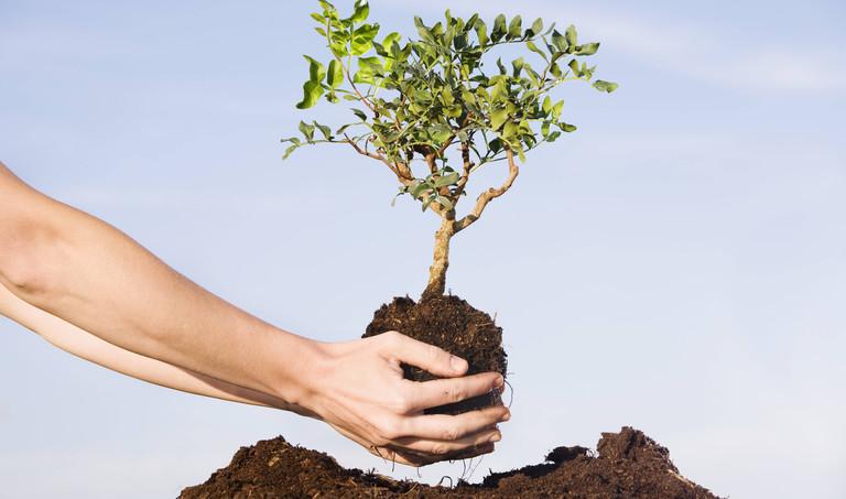 Einheitsbuddeln: Mehr Bäume fürs Klima