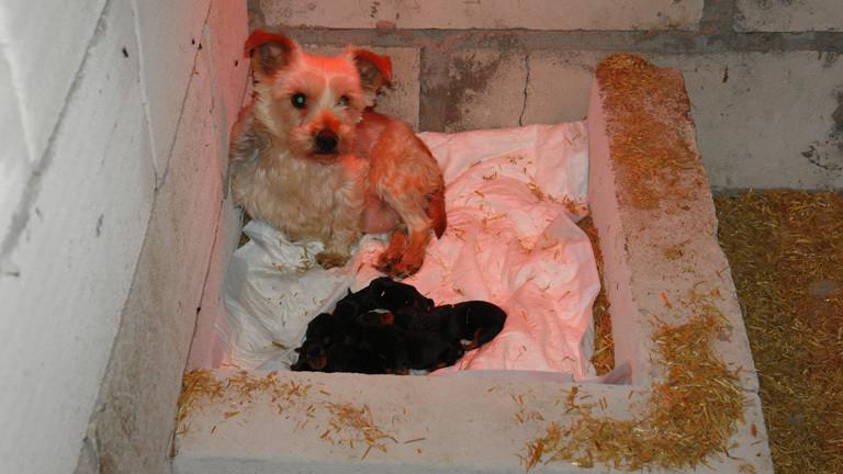 Hundemafia in Polen