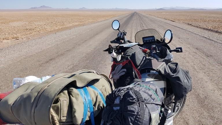 Eine Katze auf einem Motorrad in der Wüste