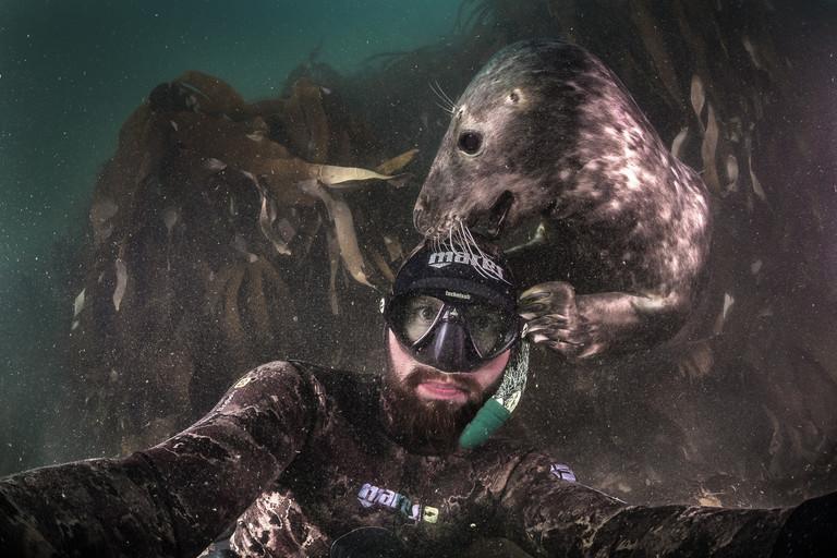 Robert Marc Lehmann wird beim Tauchen von einer Robbe angeknabbert.