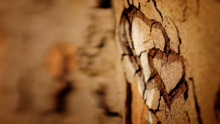 Ein Herz in Baumrinde eingeritzt.