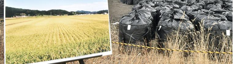 Abfall von Fukushima neben Vorher-Bild