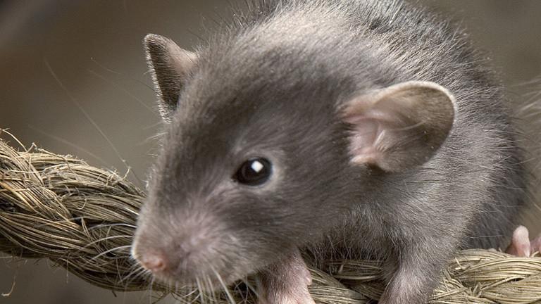 Eine Maus