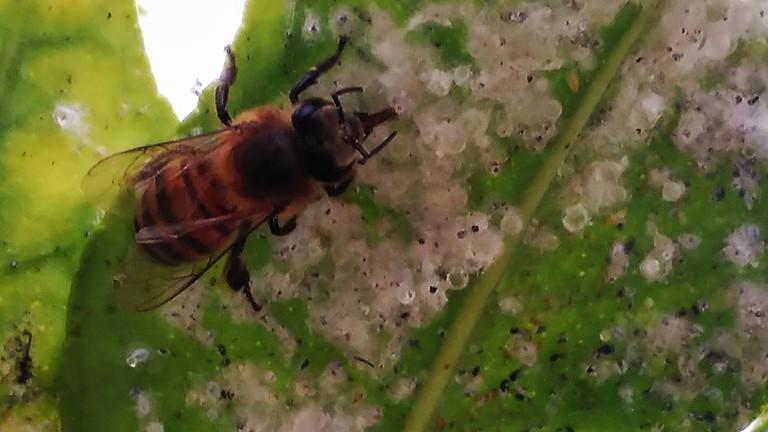 Insektizide treffen Tier-Nahrung