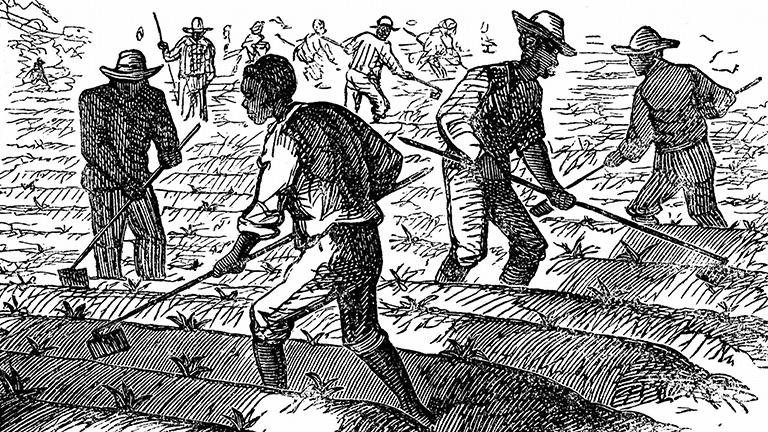 Sklaven arbeiten auf einem Feld, Stich