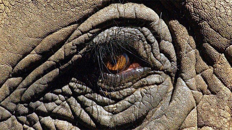 Nahaufnahme eines Elefantenauges