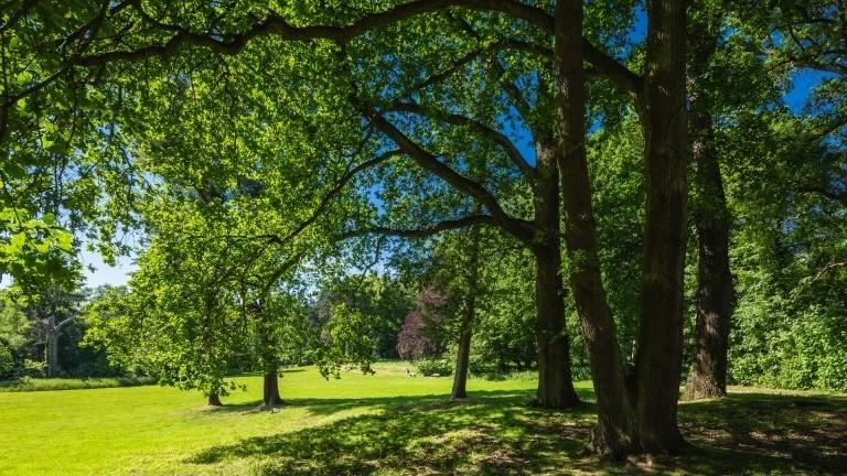 Parkanlage der Villa Grillo auch genannt Forsthaus Morp, Landschaftspark, Baeume, Wiese, Erkrath, Bergisches Land, Nordrhein-Westfalen Deutschland