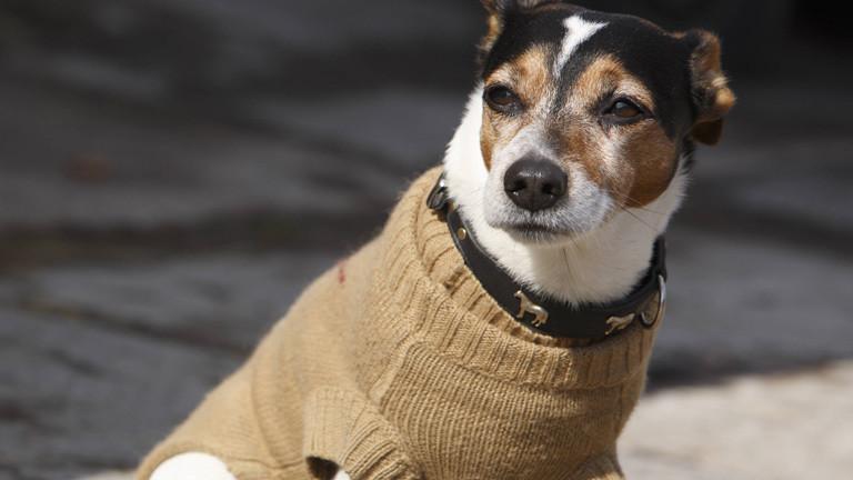 Hund mit beigem Pullover an einer Leine.