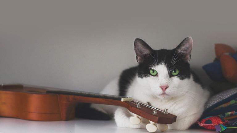 Katze sitzt neben Ukulele