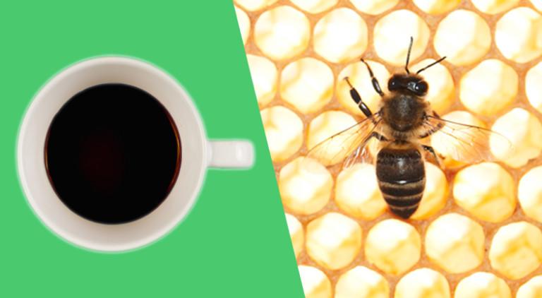 Fotomontage auf der eine Kaffeetasse und eine Biene zu sehen ist.
