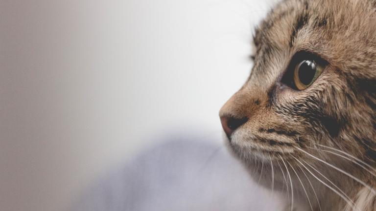 Eine Katze schaut in die Ferne