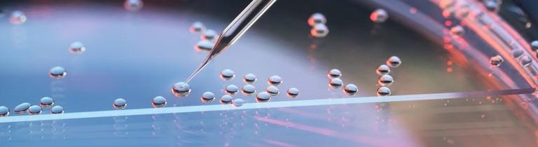 Eine Petrischale für die Stammzellenforschung