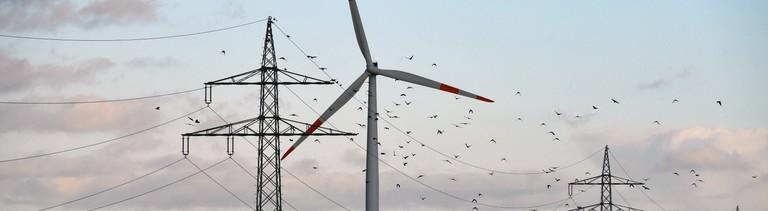 Ein Windrad, durch das ein Schwarm Vögel fliegt