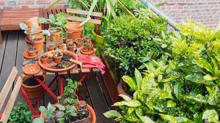 Ein Balkon voller Tontöpfe und grüner Pflanzen