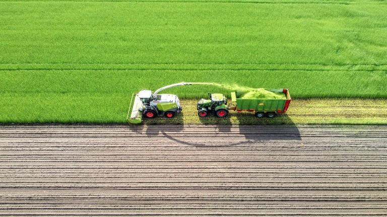 Ein Traktor, der Grünroggen häckselt