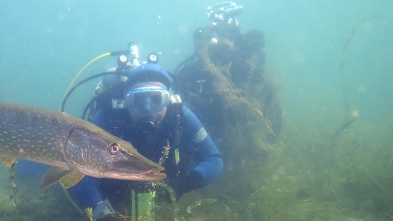 Taucher beobachten einen Hecht, Fisch des Jahres 2016, Deutschland, Nordrhein-Westfalen, Fühlinger See