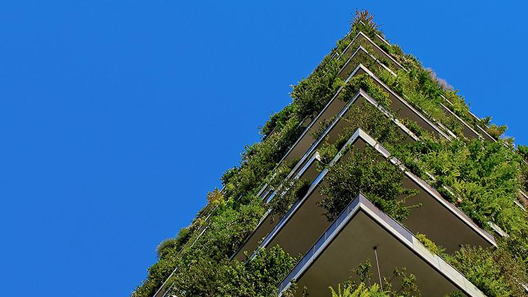 Fassaden- und Hausbegrünung für Klimaschutz