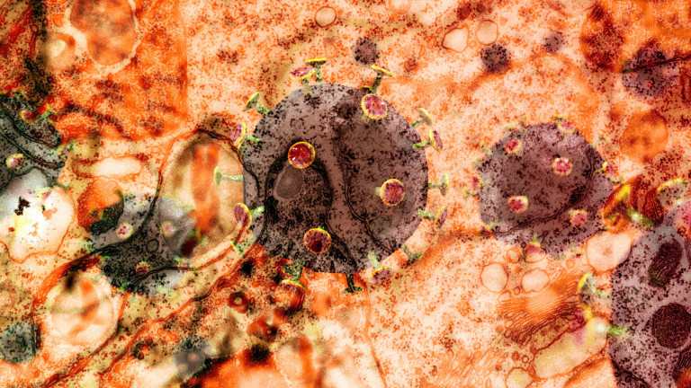 Illustration Coronavirus Sars-CoV-2