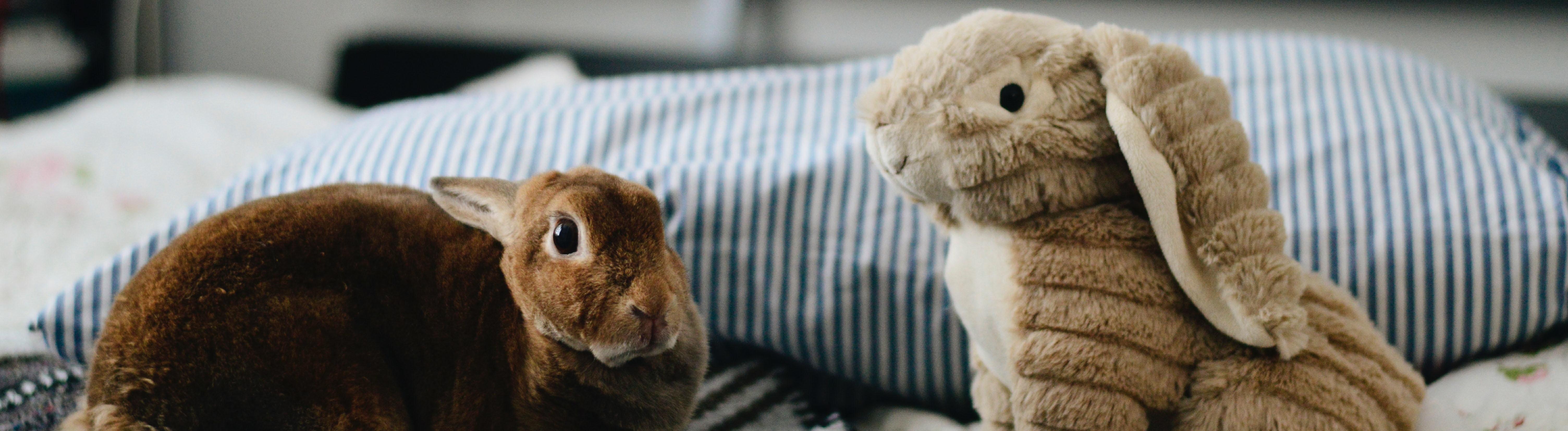 Echtes Kaninchen und Plüschkaninchen sitzen nebeneinander auf dem Bett