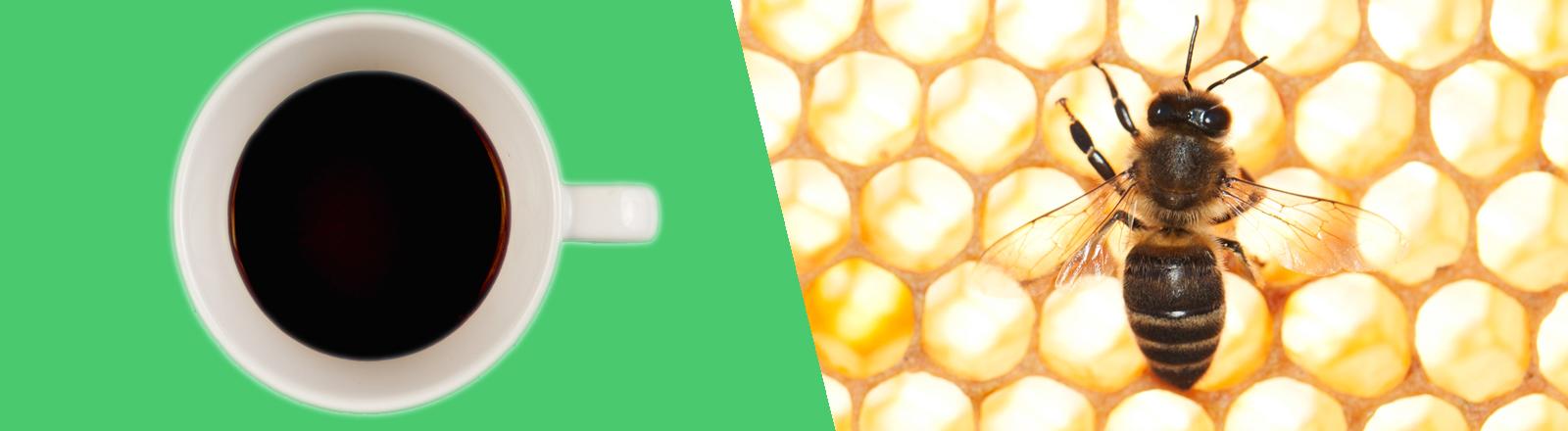 Fotomontag auf der eine Kaffeetasse und eine Biene zu sehen sind.