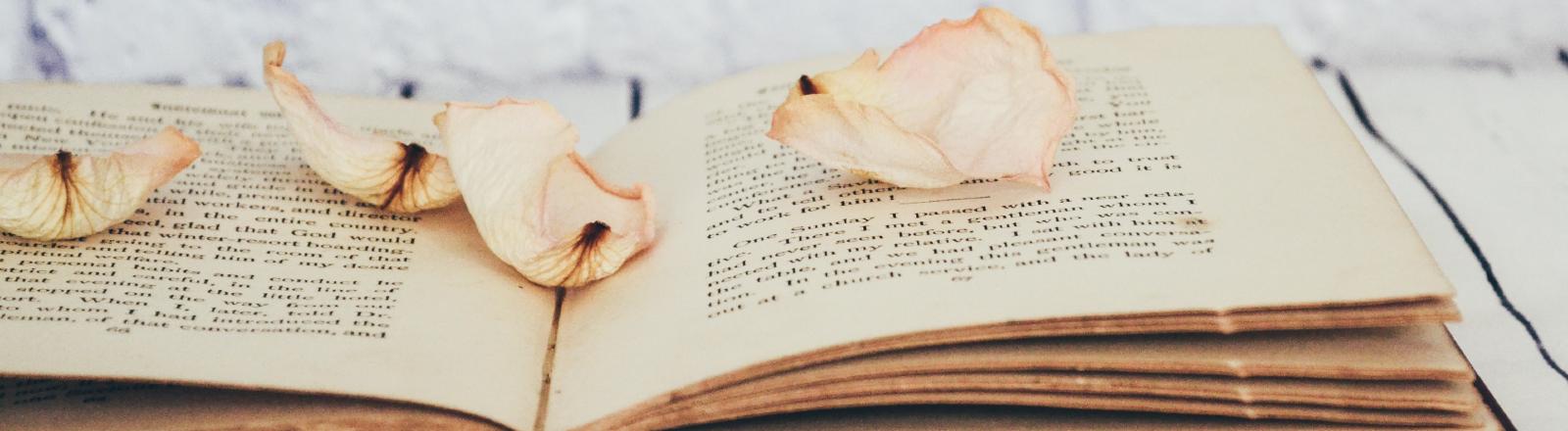 Ein altes, aufgeschlagenes Buch, darauf sind Rosenblätter platziert