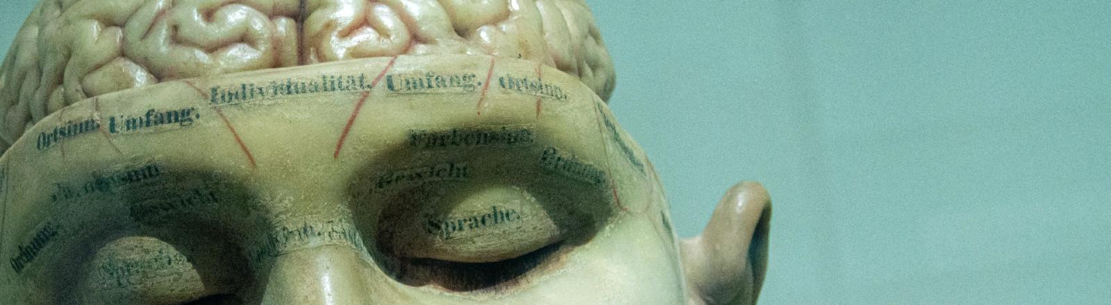 Mensch Gehirn Hirnforschung