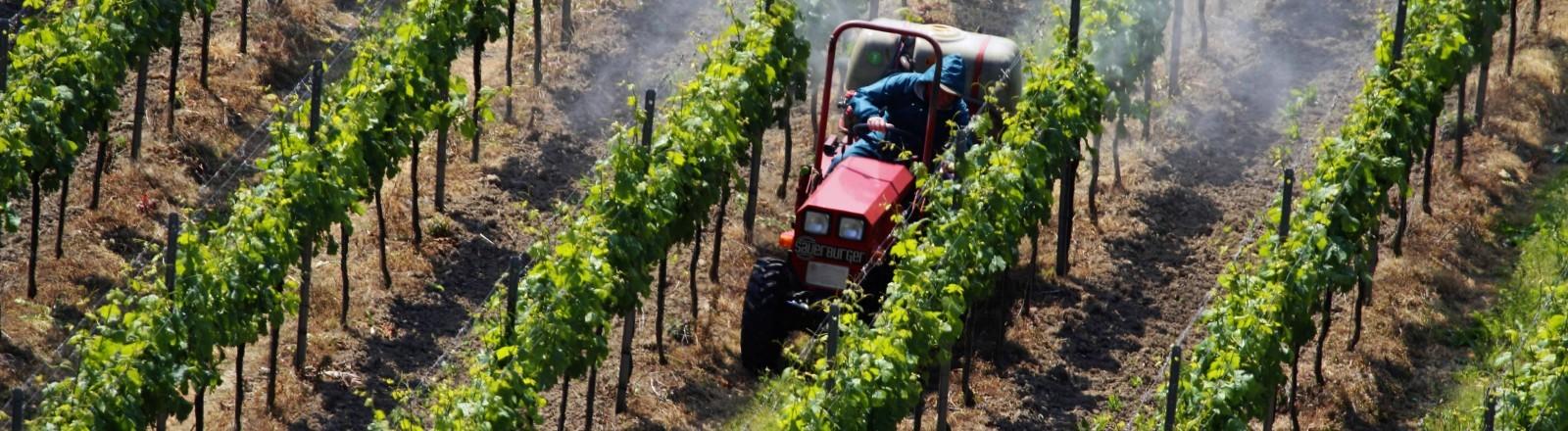 Ein Traktor spritzt in einem Weinberg