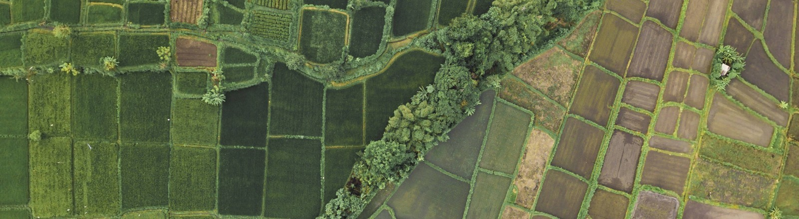 Reisfelder aus der Vogelperspektive