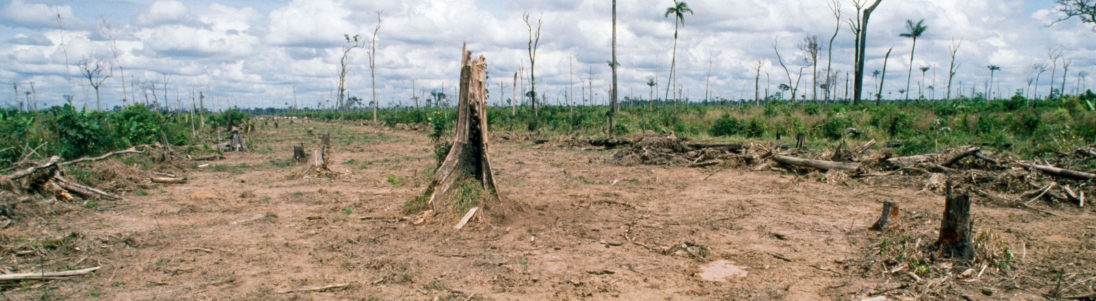 Ein Teil eines abgeholzten Regewaldes in Brasilien