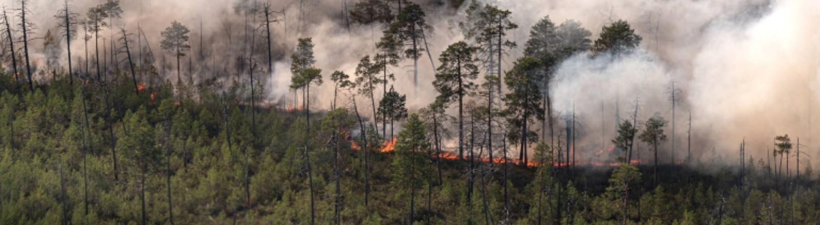 Ein Waldbrand in Russland