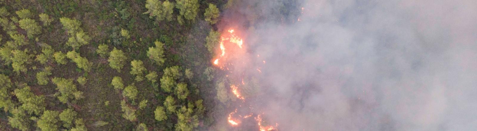 Ein Feuer brennt sich durch den Wald in Griechenland