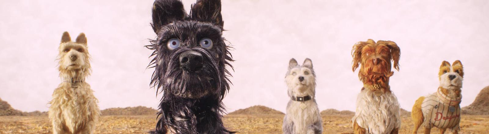 """Still aus Wes Andersons Film """"Isle of Dogs"""" - Vier animierte Hunde starren nach vorne."""