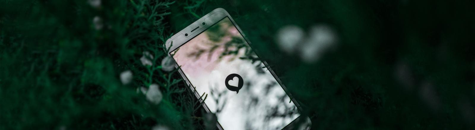 Ein Handy mit einem Online-Dating-Logo liegt auf einer Laubfläche