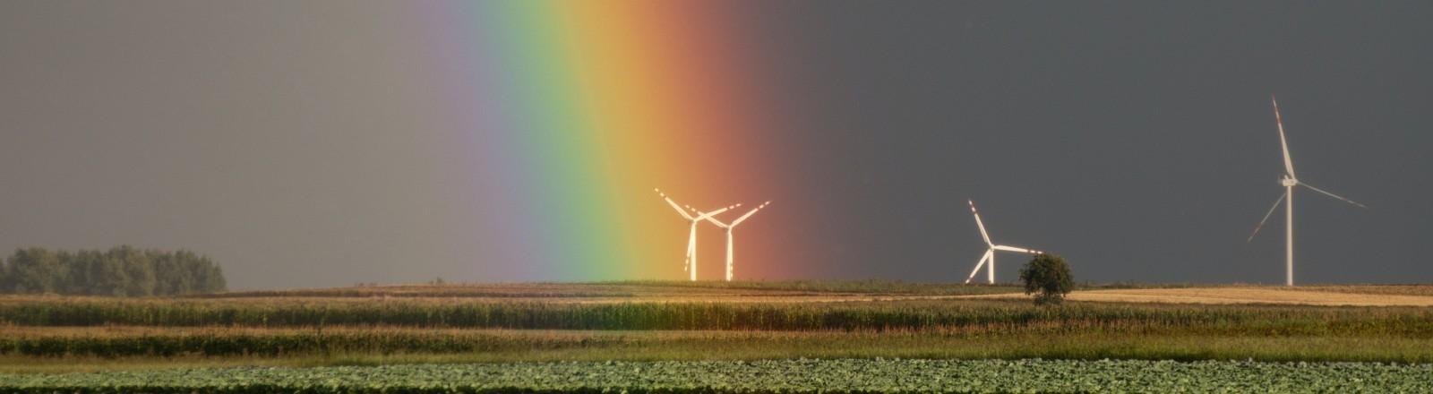 Ein Regenbogen auf einem Feld